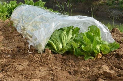 Fóliovník pro pěstování salátů