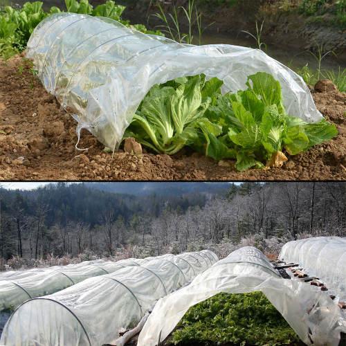 Ochrana salátů před mrazíky