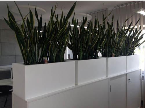 Květináče s osvětlením do kanceláří