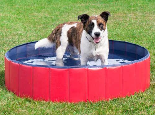 Prakticky bazén pro letní osvěžení psa